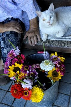 Japanese photographer Miyoko Ihara's pictures of her 88-year-old Japanese Grandma Misao & Her Cat Fukumaru since their relationship began in 2003.
