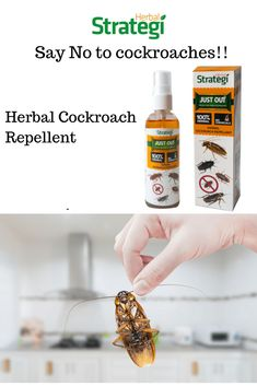 JustOut is a Best Cockroach Repellent Spray. This spray is made up of Natural Oils & Herbal Extracts. It is an effective repellent against cockroaches Herbal Oil, Herbal Extracts, Cockroach Repellent, Cedrus Deodara, Cockroach Control, Azadirachta Indica, Natural Oils, Biodegradable Products, Herbalism