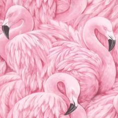 flamingo behang vogel  xxx1