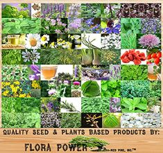 32 Types MEDICINAL & CULINARY Herb Combo, Seeds - From An... http://www.amazon.com/dp/B00XLQQANQ/ref=cm_sw_r_pi_dp_lazgxb0JTTH6F