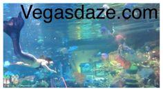 Silverton aquarium. Vegas Lights, Network Solutions, Business Profile, Aquarium, Learning, Free, Goldfish Bowl, Aquarium Fish Tank, Studying