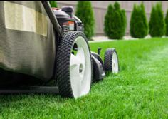 Cold season grasses can easily fight off fungal infections. Here are expert winter lawn care tips to prevent the need for fungicide treatments. Lawn Problems, Mowing Services, Lawn Care Tips, St Catharines, Lawn Service, Lawn Sprinklers, Lawn And Landscape, Landscaping Company, Landscaping Calgary