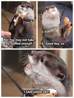 38 Super Funny Animal Pics, he looked so happy then he's all I SAID GOOD DAY!!!