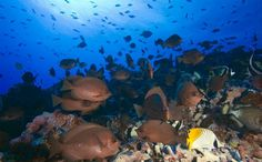 New Zealand Announces it Will Create a Texas-Sized Marine Life Reserve