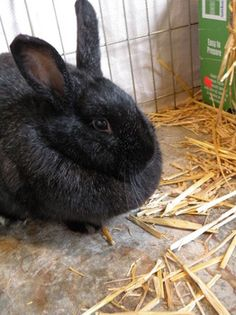 5 Reasons to Keep Rabbits for the Homestead