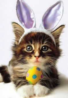 This fashionable bunny ear wearing cat wishes you an egg-cellent Easter!