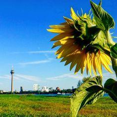 Es gibt zum Glück einige Menschen die Düsseldorf zum Blühen bringen ;-) #duesseldorf #bilk #urban