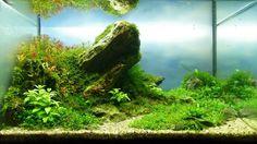 naturaquarium-aquascape-andy-01.jpg (1600×897)