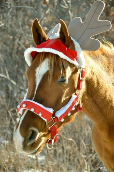 Marry Christmas & New Year Horse