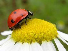 Lady Bug :)