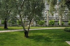 The olive trees of Villa Feltrinelli with the ancient limonaia. #lake #garda #grandhotel #villafeltrinelli #lemon #trees #olive #park