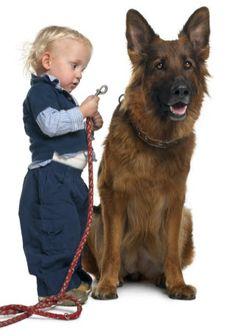 Your Shepherd and introducing him / her to your new baby
