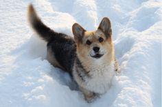 happy dog animated gif http://ift.tt/2fcT526