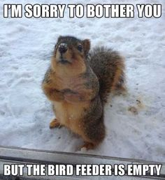 I had one actually tapping on the window while I was eating lunch one day trying to tell me the bird feeder was empty. Lol!!