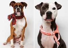 So handsome!  And both are shelter dogs - shelter babies like these are always a fantastic idea when you're thinking of bringing a new love into your life!