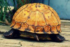 15 ciekawostek ze świata zwierząt