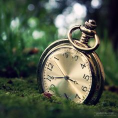 Somewhere a white rabbit is very late. By Tim Radios, Gorilla Ink, Beachy Wallpaper, Cool Photos, Beautiful Pictures, Beautiful Things, Old Watches, Pocket Watches, White Rabbits