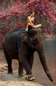 Tropicana-Andrey-Lili-Elephant-Fashion