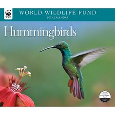 Hummingbirds WWF Wall Calendar: Many of them named for the jewels they resemble, hummingbirds are truly among nature's most exquisite creatures. They are unique in the bird kingdom, as they alone can fly backwards. They flit and hover throughout the Americas, as they are able to adapt to a variety of habitats.  $13.99  http://calendars.com/Backyard-Bird/Hummingbirds-WWF-2013-Deluxe-Wall-Calendar/prod201300002789/?categoryId=cat00176=cat00176#