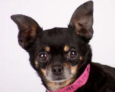 Dog: Tatiana-f14-42