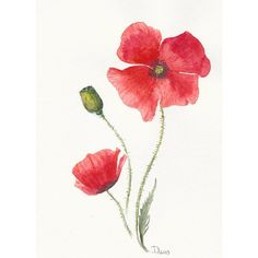 Flowers Original watercolor painting Red Poppy ($20) ❤ liked on Polyvore