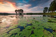 Just at the border from the Netherlands and Belgium you can find some nice creeks full with water lilies. This is one of them yesterday at sunset.  With Lee ND 0.9 Soft Grad & Lee ND 0.6 Soft Grad