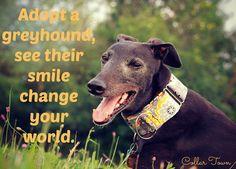 Re-pin if you love #greyhounds ! www.collartown.etsy.com #greyhound #dogs #adopt #ilovemygreyhound