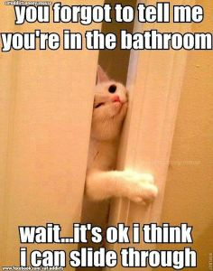 This would be something my cat would do