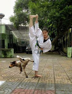 Karate dog.