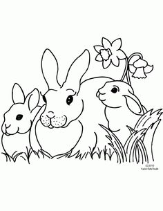 Spring Rabbit Coloring Pages