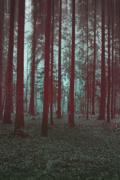 #woodlandwonderlandx #lovenickix #trees #lines #forest