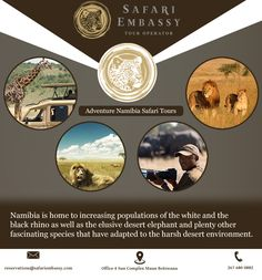 #Namibia is home of the white and the black #rhino as well as the elusive #desert #elephant and plenty other fascinating #species... Safari Embassy