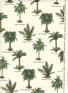 Palm Tree Varieties for an inside garden! Illustration Botanique, Cactus Y Suculentas, Tropical Plants, Tropical Gardens, Botanical Prints, Textures Patterns, Drawings, Flowers, Pictures
