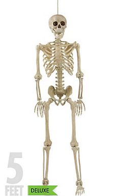 life size poseable skeleton