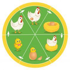 The life cycle of chicken vector image on VectorStock Science Activities, Science Projects, Activities For Kids, Sequencing Activities, Preschool Classroom, Preschool Worksheets, Chicken Vector, First Day Of School Activities, Free Printable Art