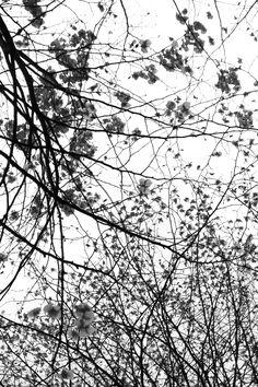 Photo Nature Arbres