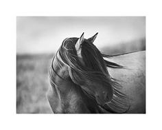 """Fierce Grace,"" by Tony Stromberg; i just love this photo..."