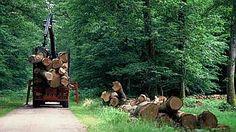ONF - Les bonnes pratiques de la mobilisation des bois
