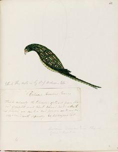Animal - Australia - Bird - Gorail