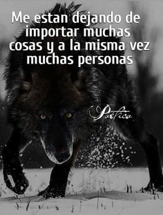 Correo - angel_521111@hotmail.com Prayer Quotes, Wisdom Quotes, Angry Wolf, Wolf Life, Quotes En Espanol, Wolf Quotes, Memorial Poems, Warrior Quotes, Wolf Spirit