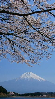 Now it's official, the World Heritage, Mt. Fuji, Japan