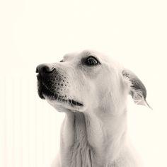 my dogs | acphoto