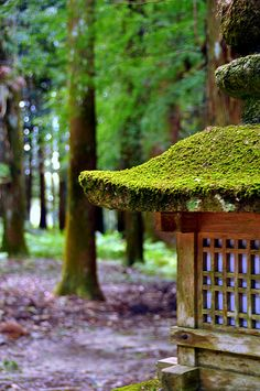 Moss Covered Wood Lantern. Kyoto, Japan.