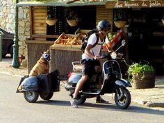 Puppy in vespa trailer :)) Scooters Vespa, Vespa Px, Lambretta Scooter, Scooter Motorcycle, Motorcycle Luggage, Vintage Vespa, Pull Behind Motorcycle Trailer, Custom Vespa, Classic Vespa
