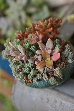 Love! Succulents are so easy to care for too.