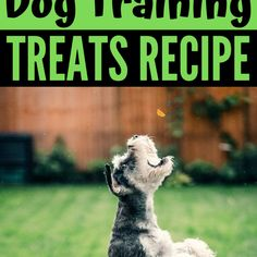 Are you looking for an easy to make dog treats recipes for your dog training? This treat only needs THREE ingredients! #fdogrecipes #dogtreats #dogfood Training Your Dog, Potty Training, Dog Smells, Dog Treat Recipes, Healthy Recipes, Dog Information, Dog Anxiety, Dog Facts, Homemade Dog Treats