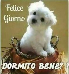it Buongiorno Italian Phrases, Italian Quotes, Good Morning Good Night, Day For Night, Friends Forever, Best Friends, Sushi Cat, Italian Life, Funny Images