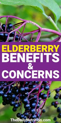 Elderberries: Benefits and Health Risks of Elderberry When you're sick, the elderberry can help make you feel better. Find out 5 other elderberry benefits here. Elderberry Syrup Benefits, Elderberry Plant, Elderberry Recipes, Elderberry Varieties, Natural Health Remedies, Natural Cures, Herbal Remedies, Wellness Mama, Health