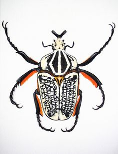 insect artwork