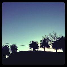 Las palmeras del Parque Rodó se proyectan a contraluz <3 Montevideo, Celestial, Sunset, Outdoor, Palm Trees, Uruguay, Parks, Outdoors, Sunsets